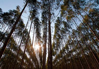 Sustainability Reports